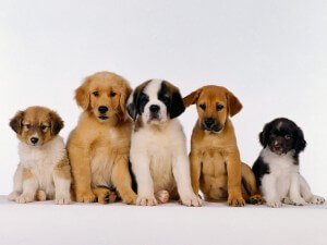 Can you guess which dogs have which variants of the genes?