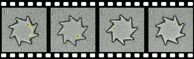 The motion of bacteria caused this notched cog to rotate. The yellow circled dot is a reference point.