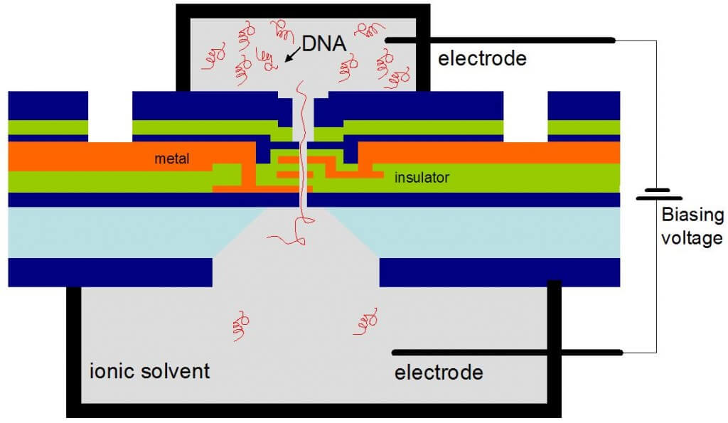 Strands of DNA suspended in a solvent would be encouraged to pass through the nanopore due to an electric bias. Electric fields in the pore would control strand movement and read the DNA.