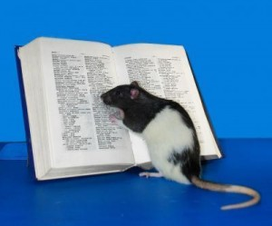 No, it wasn't smart enough to read, but genetically manipulated Hobbie-J was one smart rat.