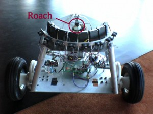 A giant hissing cockroach guides the RoachBot by moving on top of a trackball.