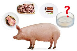 The next pork product could be coming from a petri dish.