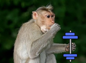 National Children's Hospital used Macaque monkeys to test the effects of myostatin blocking on primates. The result: