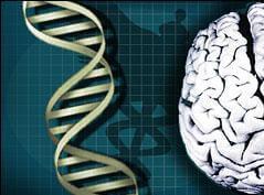 intelligence-gene-williams-syndrome