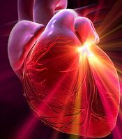 stem-cells-heart-mice
