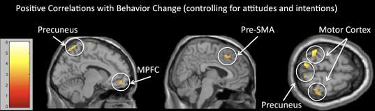 brain-scans-predict-behavior
