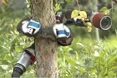 carnegie-mellon-snake-robot-tree