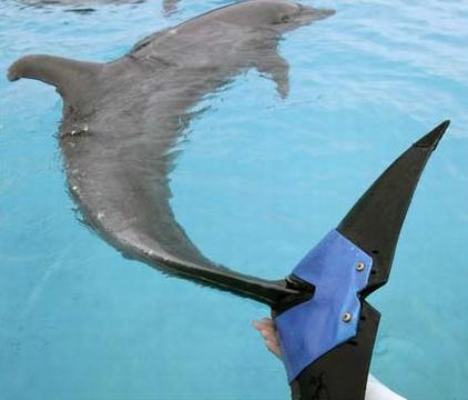 Fuji the Bionic Dolphin