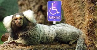 Paralyzed marmoset healed with stem cells