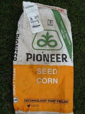 pioneer corn