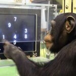 monkey-learning