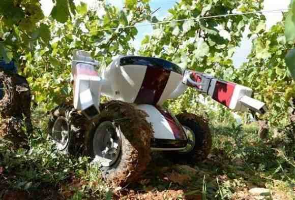 Automation Reaches French Vineyards With A Vine-Pruning Robot