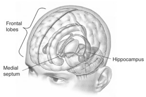 The hippocampus, located in the medial temporal lobe, is the brain's center for memory formation and storage. [Source: Wikipedia]