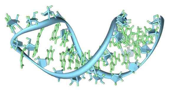 RNA molecule folded back upon itself [Source: Wikipedia]