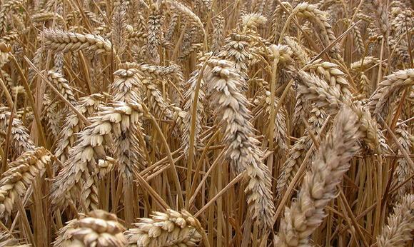 Monsanto_#1 BIG