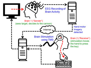 brain-net-diagram