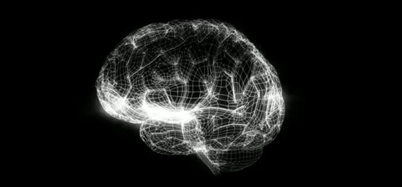 brain-model