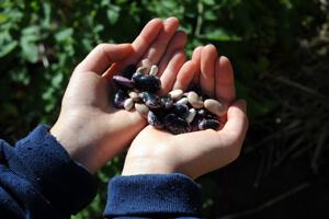 seeds-hands