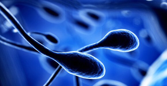 sperm, stem cells, fertility, medical research, infertility