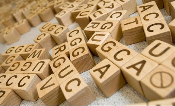 dna-genes-blocks
