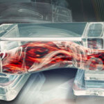 muscle-powered-3d-printed-bio-bots
