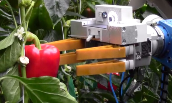 robot-pepper-picker 1