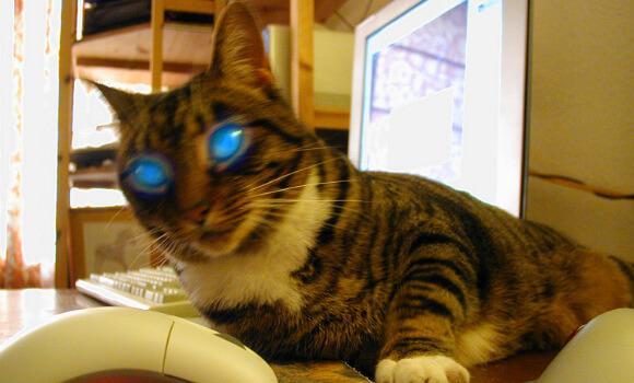 catbot 9000