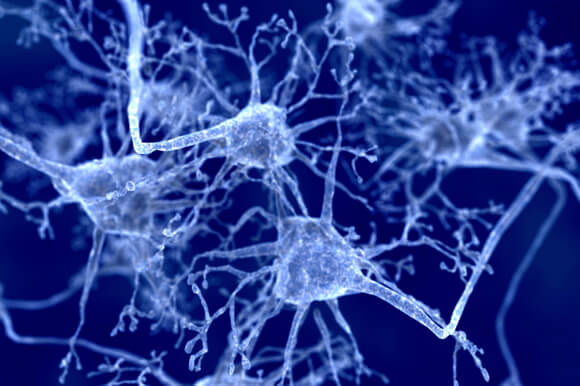 neurons-networks1