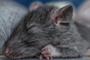 scientists-find-sleep-ultimate-memory-aid-4