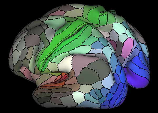Most Detailed Brain Map Yet 2