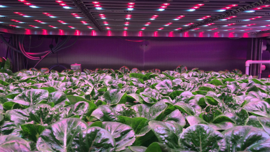 The Technologies Changing How We Grow, Distribute, and Consume Food