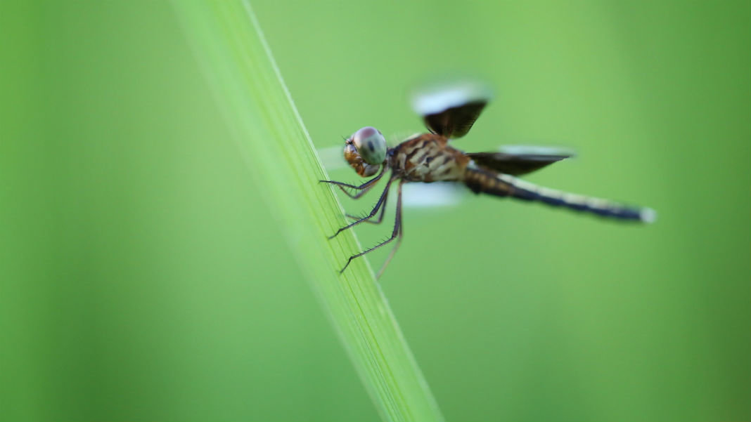 dragonfly-hanging-leaf-biomimicry-drones