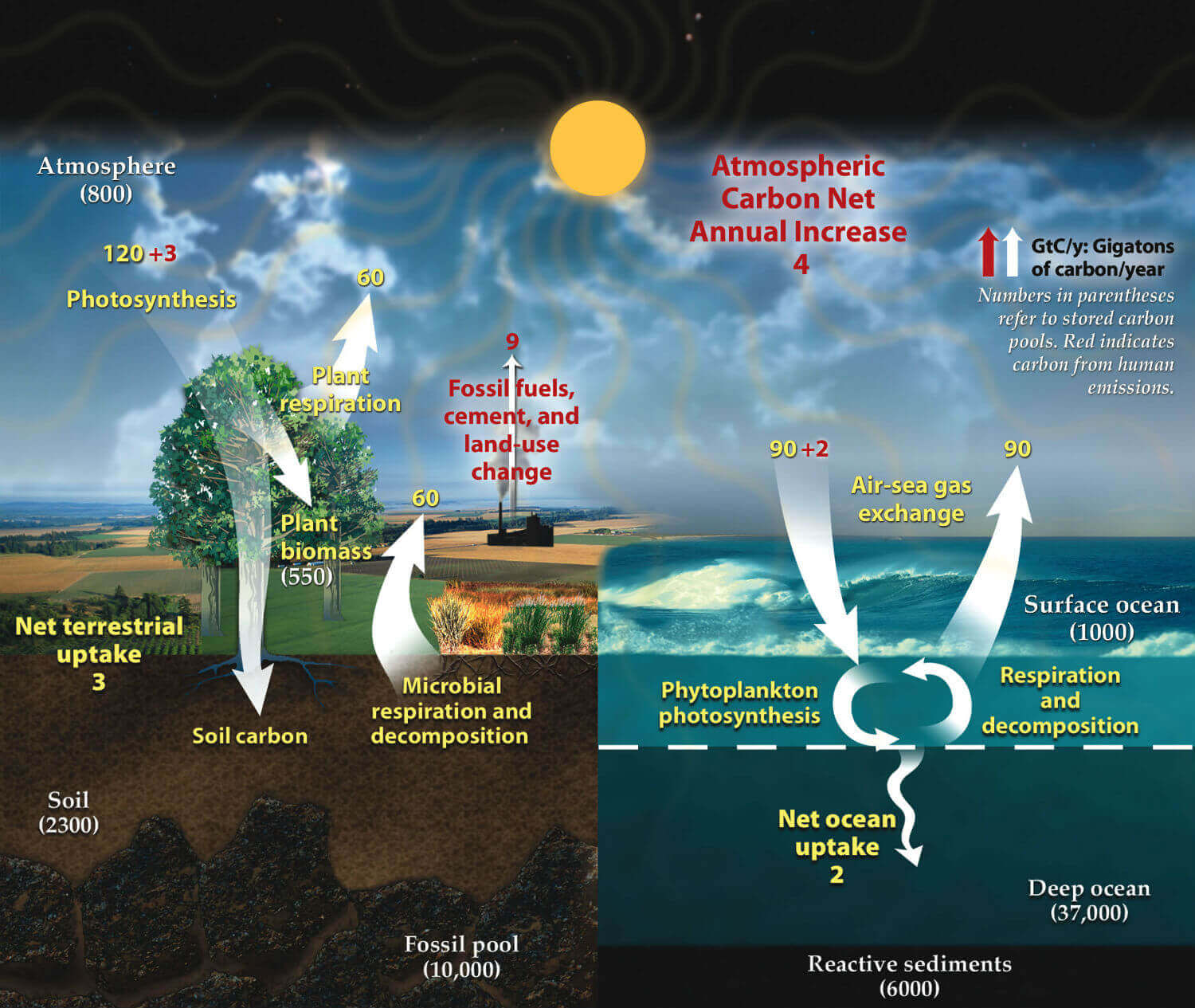 the-carbon-cycle-Earth-biocomponents-nature-ORNL