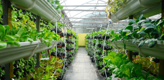 vegetables-growing-vertical-farm-drip-irrigation