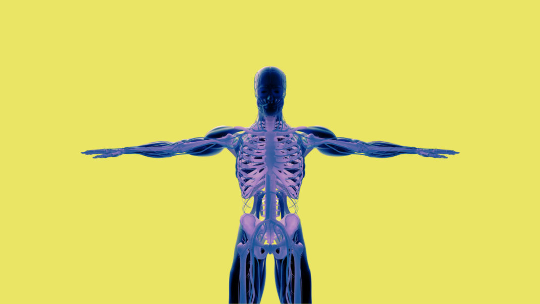 human-anatomy-see-through-xray-illustration-3d-rendering-yellow-background