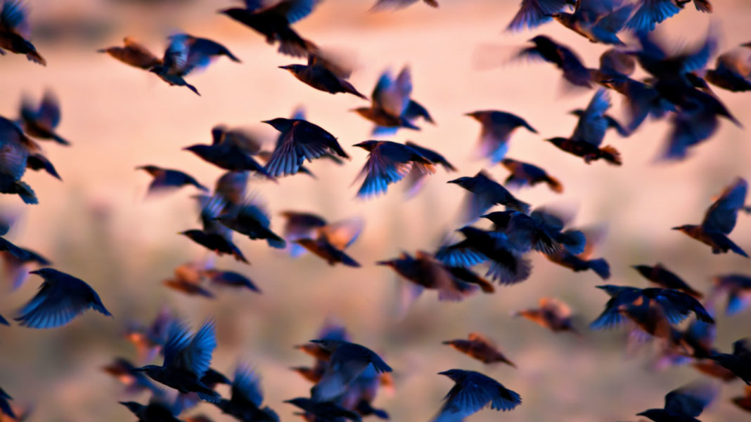 flock-of-birds-flying-swarm-intelligence-drones-blockchain-robotics