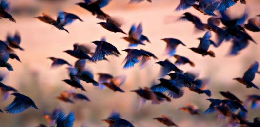 flock-of-birds-flying-swarm-intelligence-drones-blockchain-robotics