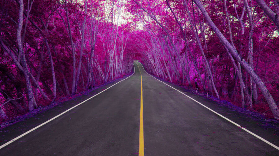 road-to-longevity-purple-forest-colorful