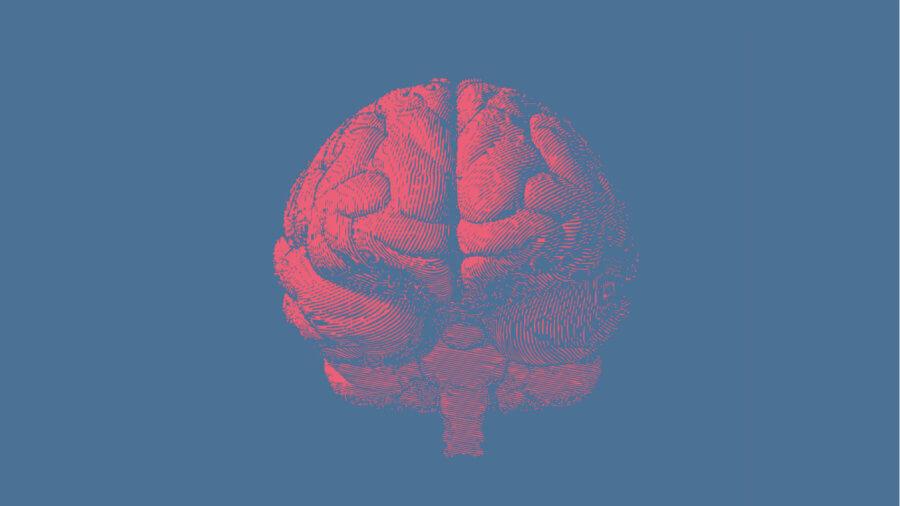 powerful new algorithm is a big step towards whole brain simulation