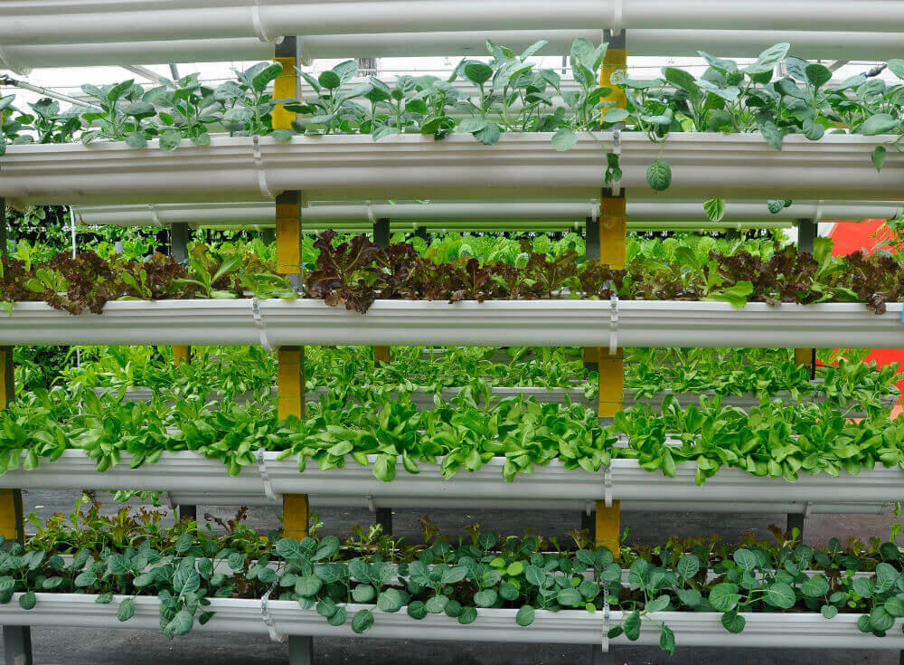 vertical-farm-vegetables-grown-using-fertigation-farming-system-660711280