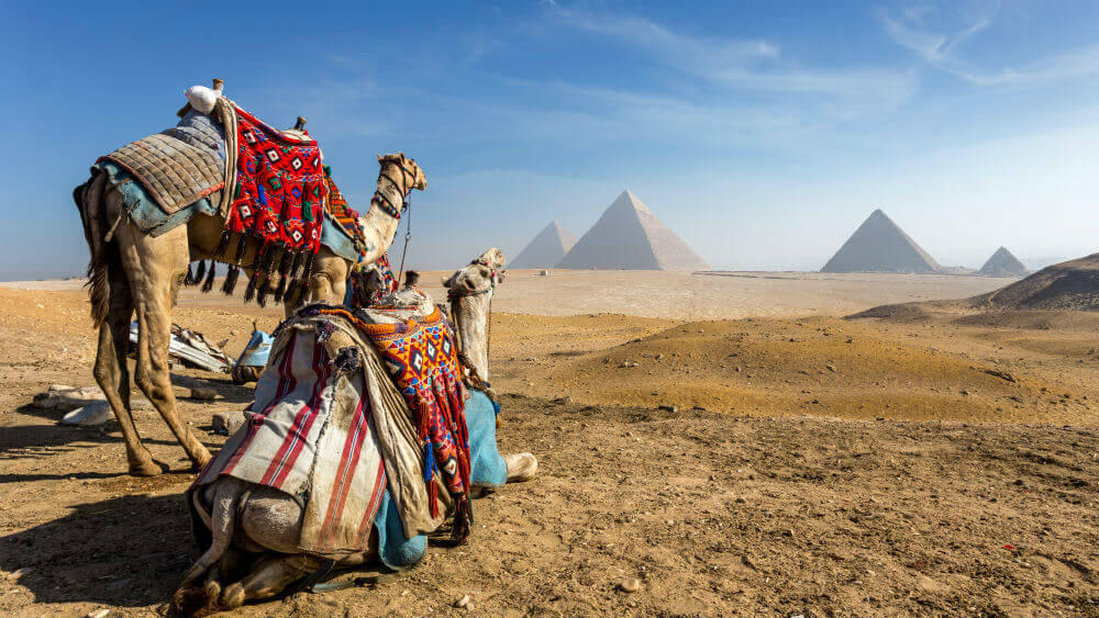 guide to cairo egypt giza camels view pyramids 654317653