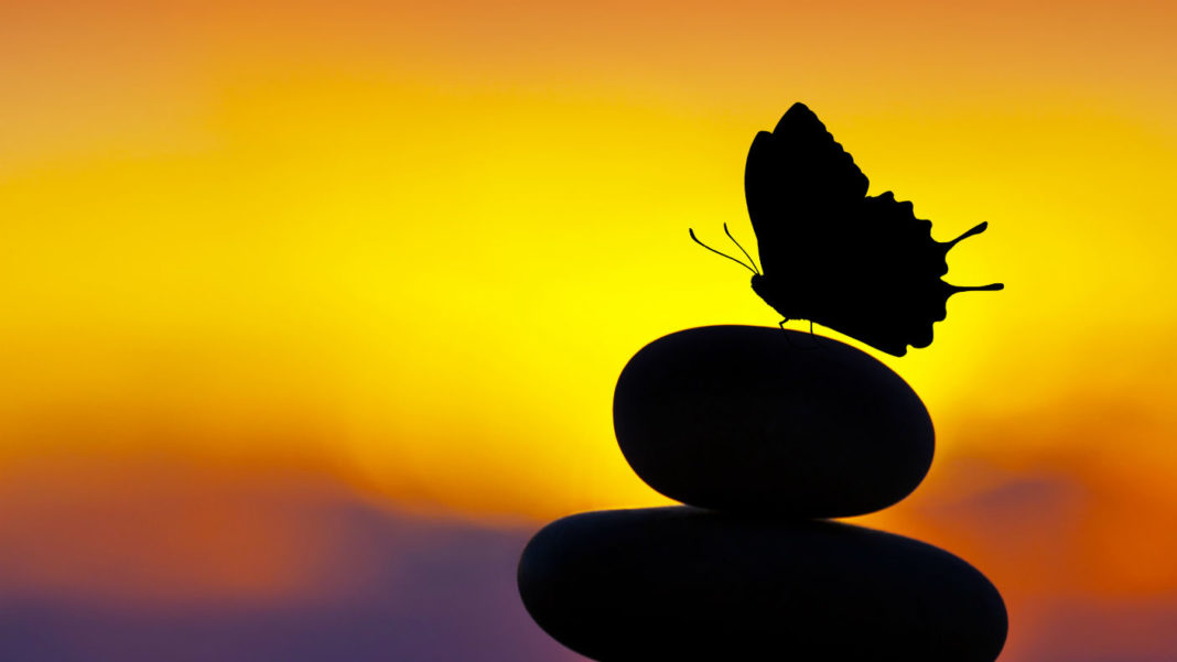 human-longevity-life-extension-stones-balance-butterfly-silhouette