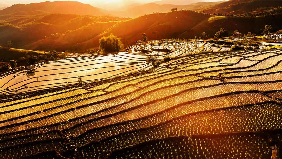 terraced paddy at sunset