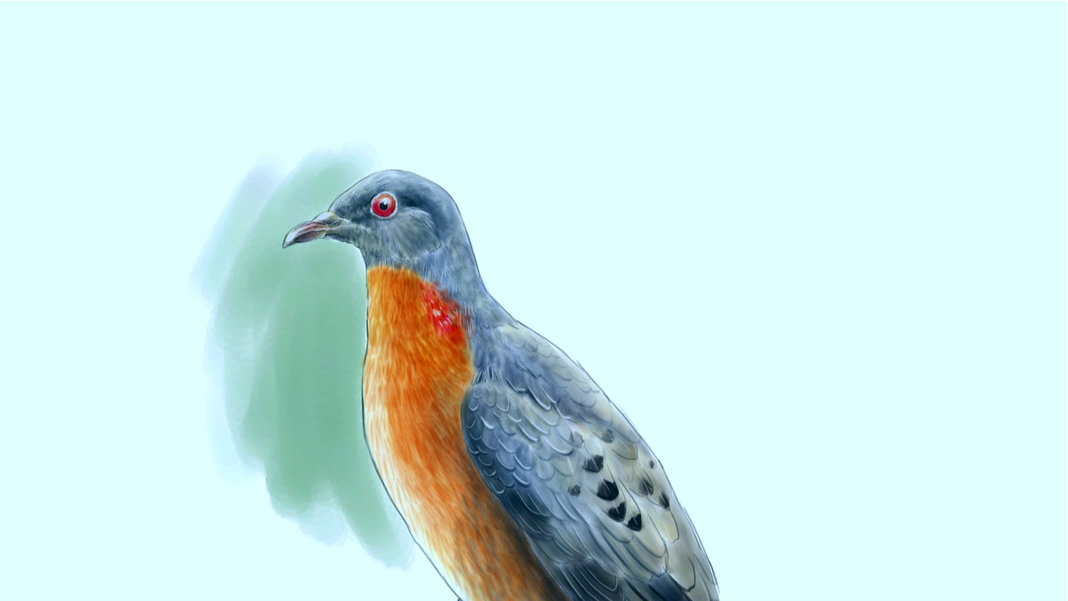 de-extinction north passenger pigeon digital illustration