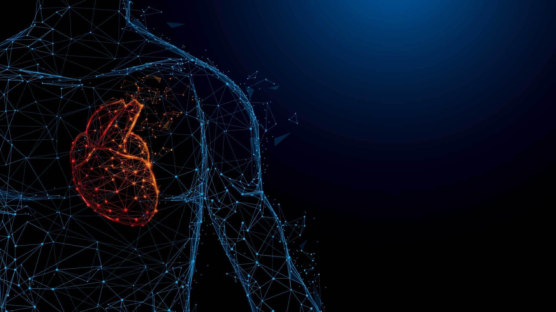 Human Heart Anatomy Form Lines