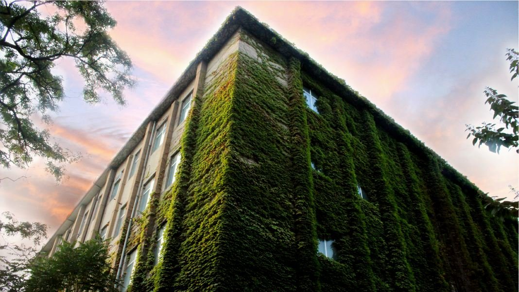 green plant covered building