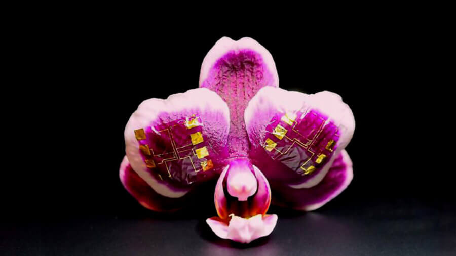 orchid with ion drive transistor brain computer interface