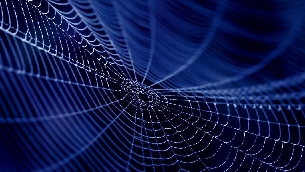 spider web silk in the dark biotechnology