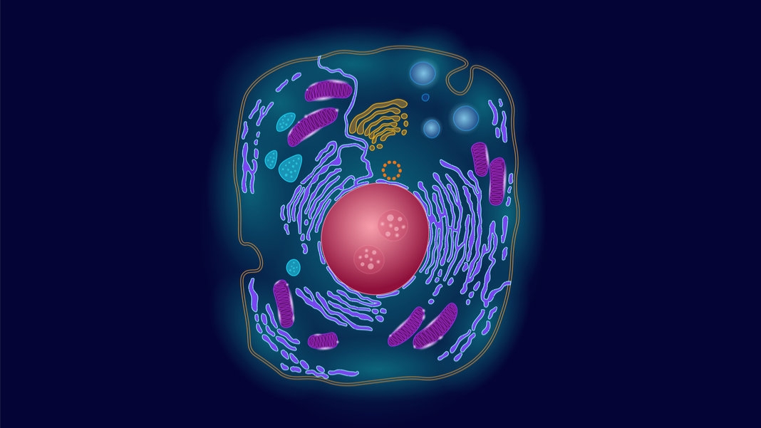 synthetic animal or human cell biotechnology