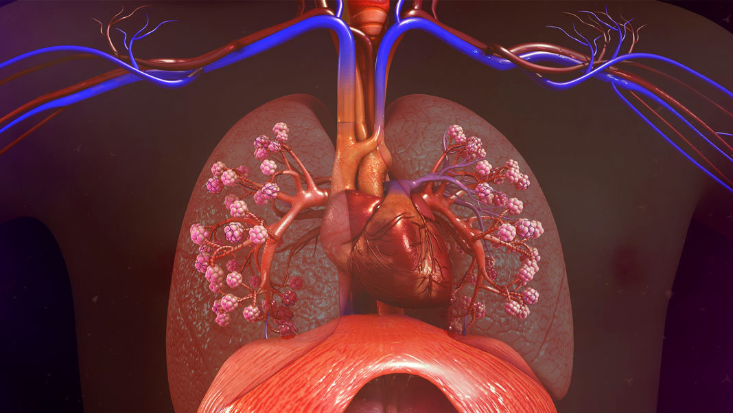realistic illustration human lungs heart future of health